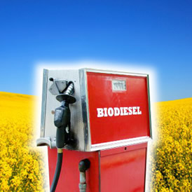 Did you know that petrol and diesel now contain a minimum of 2.5% biofuels?