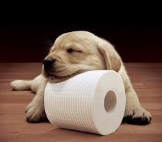 dog and toilet roll