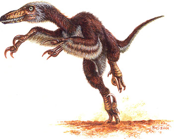 Dromaeosauridae - the raptors