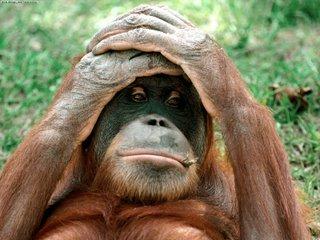 http://www.realscience.org.uk/uploaded_images/Orangutan-797970.jpg